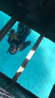 Glass bottom boat in CocoCay- employees were very funny but professional at