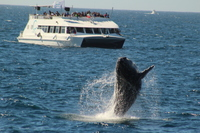 Cabo San Lucas whale watching at its best!