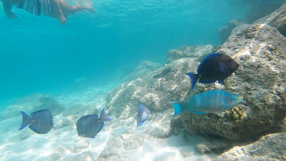 Snorkeling on Princess Caye