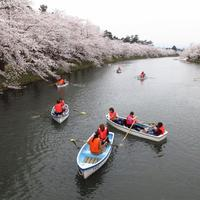 Beautiful Sakura along canal banks