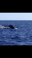 Cabo Whales