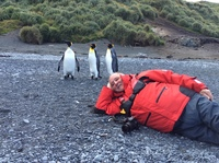 On beach of Macquarie Island with King penguins