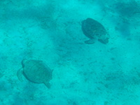 We did see about 5 turtles at Buck Island, Turtle Cove.