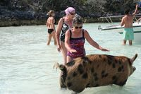 Swimming with pigs at Big Major Cay, Exumas, Bahamas