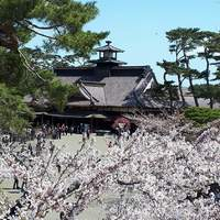 A park in Hakadote Japan with cherry blossoms.