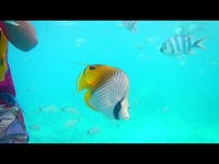 Bora Bora - colorful fish everywhere!