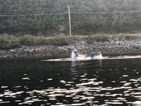 A Whale in Ketchikan Harbor on fishing trip