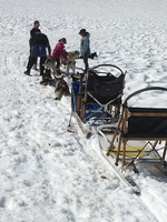Dog sledding on Mendenhall Glacier