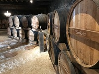 Camus barrel room - cognac