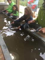 Gold panning- so exciting for my grandkids!!!