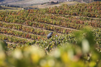 A vineyard in the heart of the Douro Valley