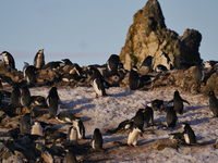 Penguins at Halfmoon Island