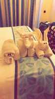 Towel animals !