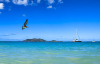 Pussers Beach Tortola....pelican fly past..not the red arrows but still goo