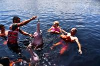 swimming with free pink dolphins, Manaus
