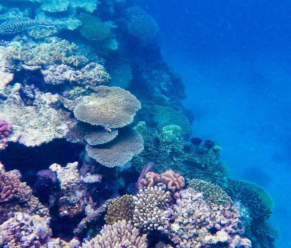 Coral drop off at the edge of Yamacutta Reef
