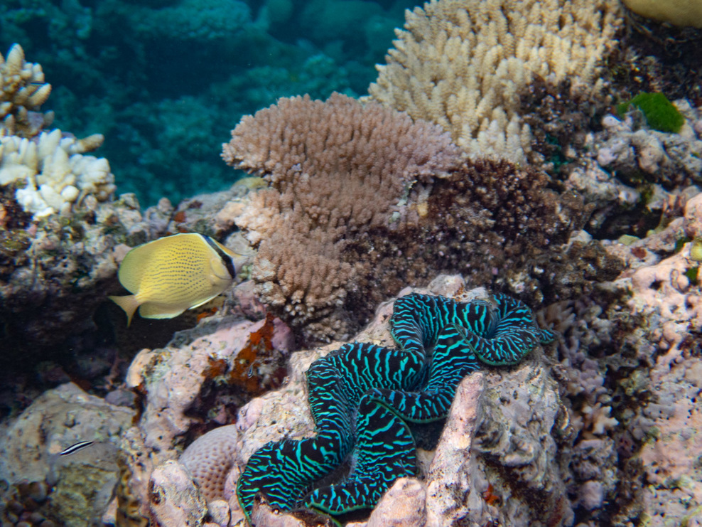 Clam, coral and fish