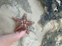 Giant starfish we found at Love, Beach!