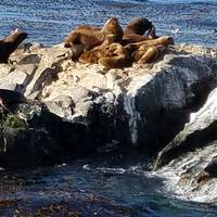 Sea lions viewed on our Ushuaia excursion
